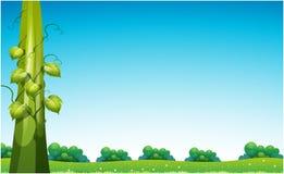 Gambo di una pianta di fagioli nel campo Immagini Stock Libere da Diritti