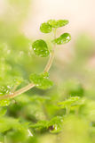 Gambo verde Fotografie Stock Libere da Diritti