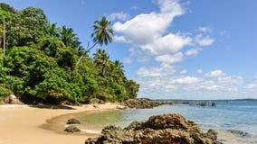 Gamboia海滩在Morro de圣保罗,巴西 免版税图库摄影