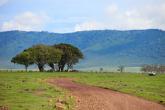 Game drive Stock Image