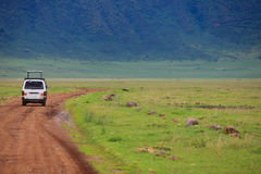 Game drive Royalty Free Stock Image