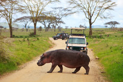 Game drive Stock Photos
