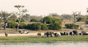 Game drive. Vehicle on the Chobe Riverfront Stock Photo