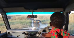 Game drive in the african savannah