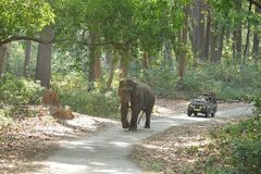 Game drive in  forest of Jim Corbett. JIM CORBETT, INDIA-May 24: A Safari jeep on game drive watching huge tusker moving on the road of Dhikala forest on May 24 Stock Photo