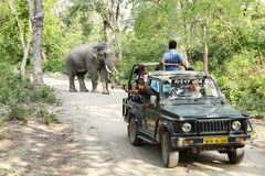 Game drive in Jhirna Forest Royalty Free Stock Photos