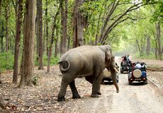 Game drive at Jim Corbett Stock Photography