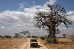Game drive under the baobab Royalty Free Stock Photography