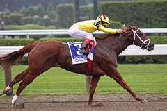Game Face Wins the Honorable Miss Stakes Stock Image