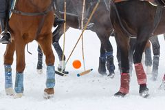 Legs of horses and hoof with sticks and ball on the game horse polo on the snow in winter royalty free stock image