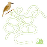 Game labyrinth find a way bird vector illustration Royalty Free Stock Photos