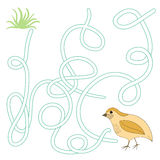 Game labyrinth find a way quail vector Stock Images