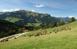 Game preserve. Named wildpark Aurach in Austria stock photo