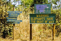 Game Reserve in Malawi - Elephants Have Priority Stock Photos