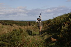 Game Shoot. In Ellingham, Northumberland stock photos
