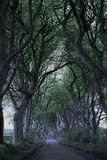 Game of Thrones Dark Hedges N.Ireland Stock Image