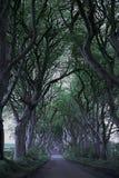 Game of Thrones Dark Hedges N.Ireland Stock Image