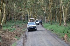 Game viewing vehicle in the forest Royalty Free Stock Images