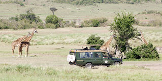 Game viewing vehicle and giraffes Royalty Free Stock Photos