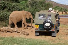 Game viewing vehicle in the savanna Stock Images