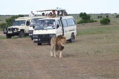 Game viewing vehicle in the savanna Stock Photography