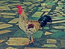 Gamecocks Таиланд Стоковое Фото