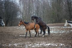 Games of horses on the meadow Royalty Free Stock Photo