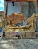 Games of thrones. A cat on a vintage armchair Royalty Free Stock Photos
