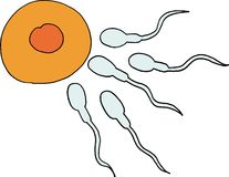 Gametes. Illustrated sperms and egg. hand drawn image Stock Image