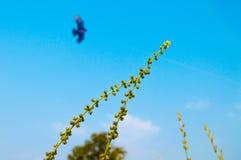 Gamflyg i himlen Arkivfoto