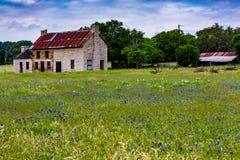 Gamla Abandonded Texas Homestead Farmhouse med Bluebonnets och Ot Royaltyfri Fotografi
