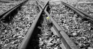 Gamla använda järnvägsspår i duotone och liten blomma i färg ar Arkivfoto