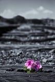 Gamla använda järnvägsspår i duotone och liten blomma i färg ar Arkivfoton