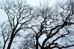 Gamla avlövade kala träd över blå himmel Royaltyfri Bild