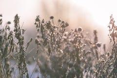 gamla böjelser för torrt gräs i vintern - retro tappningblick royaltyfri fotografi