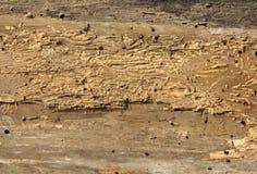 Gamla bräden med trämaskskadahål Royaltyfri Fotografi