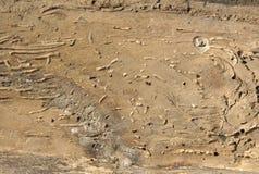 Gamla bräden med trämaskskadahål Arkivbild