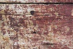 Gamla bräden med trämaskskadahål Fotografering för Bildbyråer