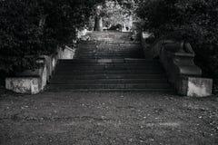 Gamla brutna trappa och träd, läge, bw Royaltyfria Bilder