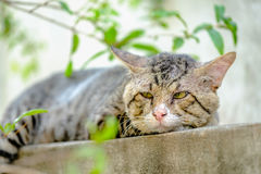 Gamla Cat Relaxing On Wall royaltyfria bilder