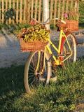 Gamla cykel och blommor Royaltyfria Foton