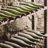 Gamla dammiga vinflaskor i källaren - fyrkantig sammansättning royaltyfria foton