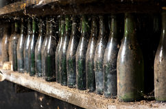 Gamla dammiga vinflaskor på en källarehylla Royaltyfri Foto
