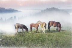 Gamla filmfoto med hästar royaltyfria bilder