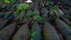 Gamla granater på gyttja