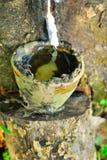 Gamla gummiträd, gummi och gummin, rubber knackning Arkivfoto
