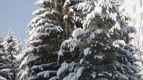 Gamla högväxta prydliga träd, filialer böjde under det tjocka lagret av snö arkivfilmer
