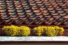 Gamla keramiska taktegelplattor med dekorativa gula blommor Royaltyfri Foto