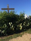 Gamla kyrkliga taggiga päron för lacrosse Royaltyfria Bilder