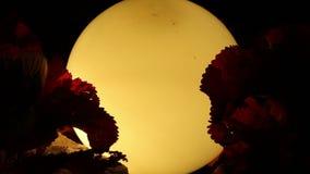 Gamla lampa och växter i brisen arkivfilmer